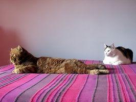 Cómo quitar gatos endurecido de un gato de la pata