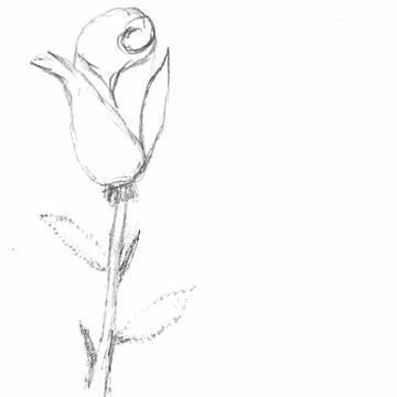 Aprender a dibujar una rosa