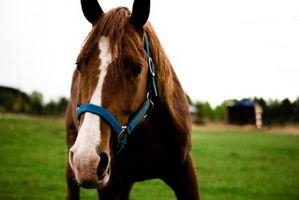 Cómo afrontar la pintura de un caballo
