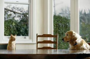 Diferencias entre Frontline Plus para gatos y perros