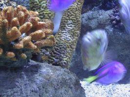 El uso de sales de Epsom en acuarios peces