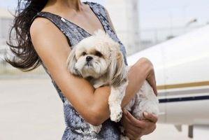 Cómo adoptar una mascota en el SPCA de Dallas
