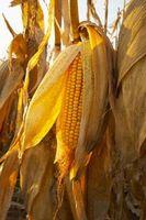 """Cómo hacer los tallos de maíz para un juego de """"Mago de Oz"""""""