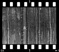 Construcción de una caja de luz para negativos fotográficos