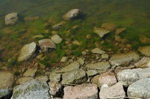 ¿Qué causas las algas a crecer más rápido?
