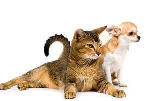 Veneno para ratas seguro para mascotas