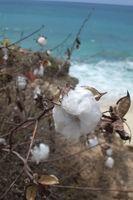 ¿Cómo se hace el algodón en hilo?