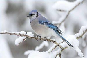 Cómo construir un hábitat de aves