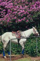 Cojines de silla de montar y cuidar el caballo