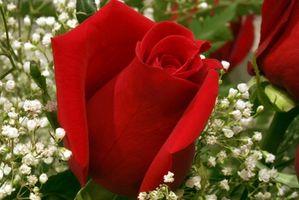 Ideas románticas para hacer de su cónyuge para un aniversario de boda 5