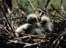 Cómo criar a las aves recién nacidas