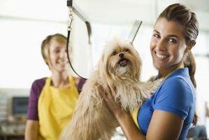 Cómo entrenar para perros