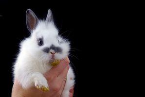 Cómo identificar las partes del cuerpo de un conejo