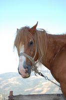 Cómo personalizar tu remolque para caballos antiguo con un presupuesto