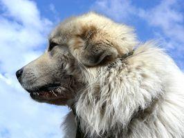 Tumores mal olor en los perros