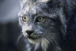Especificaciones de Bobcat
