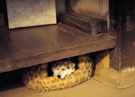 Cómo hacer que tu cachorro dormir en su habitación, pero fuera de su cama