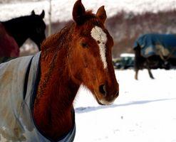 Cómo hacer una correa nueva para una manta de caballo