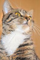 Cómo hacer un gato rasguñando el poste Sisal tela