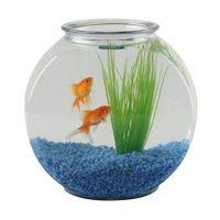 ¿Puede vivir tigre peces y peces de colores en el mismo tanque?
