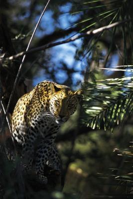 Centro de conservación de vida silvestre de montaña rocosa
