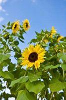 Temas de boda de verano con flores