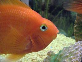 Cómo limpiar el calcio de un tanque de acuario de vidrio