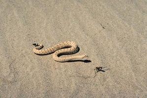 Cómo hacer un fósil de la serpiente