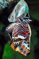 4 º proyecto de grado en el ciclo de vida de una mariposa