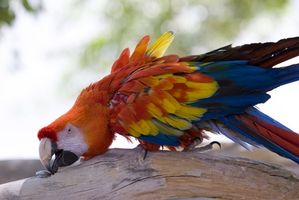 Sobre los pájaros del loro