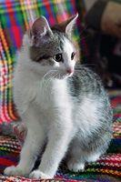 Sobre el remedios de contador para la diarrea en gatos