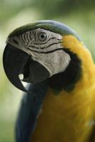 ¿Un ruido es peligroso aves?