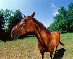 Cómo obtener capas de caballo a caballo