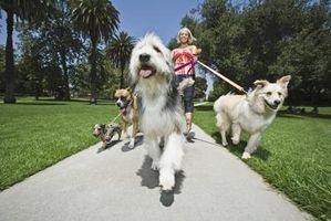 Collares y correas para perros