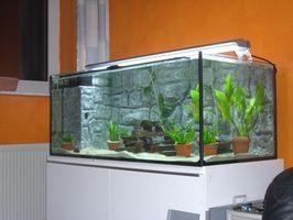 Tipos de algas en el acuario de vidrio