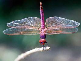 Cómo construir un hábitat de la libélula para niños
