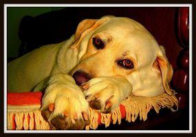 Primeros síntomas de la enfermedad de Lyme en mascotas