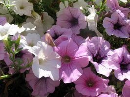 Adaptaciones de las plantas con flores