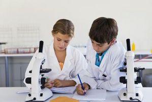 Preparación de portaobjetos de microscopio algas