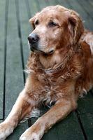 Cómo entrenar perros para personas sordas en Arizona