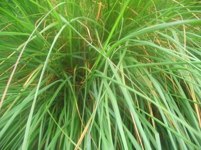 Los efectos de Ultra luz violeta en el crecimiento de las plantas