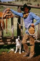 Cómo entrenar los Collies de frontera a la manada sin ovejas