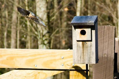 ¿Poner aves casas ayuda al medio ambiente?
