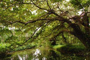 Arkansas del este ambiente y la conservación de plantas nativas