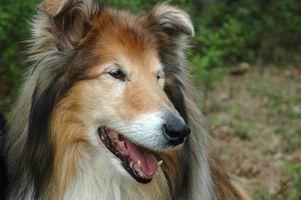 Causa de infecciones de la vejiga en perros hembra