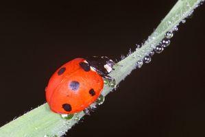 Lista de insectos en Ohio