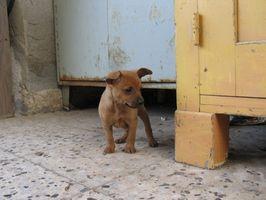 La toxicidad de la tinta de la pluma para cachorros