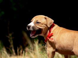 Cómo entrenar un cachorro salvaje