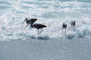 Cosas divertidas que hacer para los niños en Marco Island, Florida