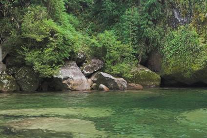 Especies amenazadas de la selva brasileña